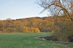 wytham hill